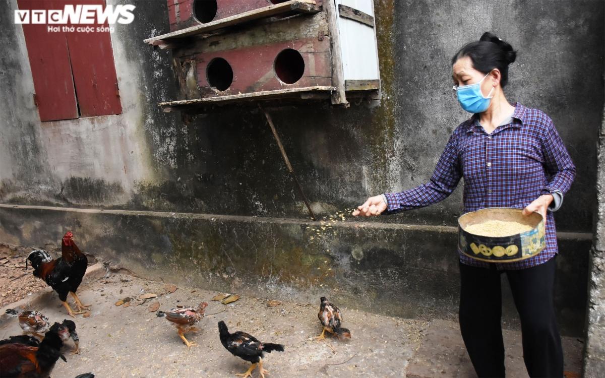 Bà Kha hàng ngày chăm sóc gà, ngan giúp gia đình bà Hợi trong lúc cả nhà phải đi cách ly.