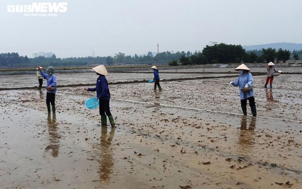 Phụ nữ khu dân cư Bờ Đa xuống đồng gieo cấy giúp để không tấc ruộng nào bị bỏ trống.