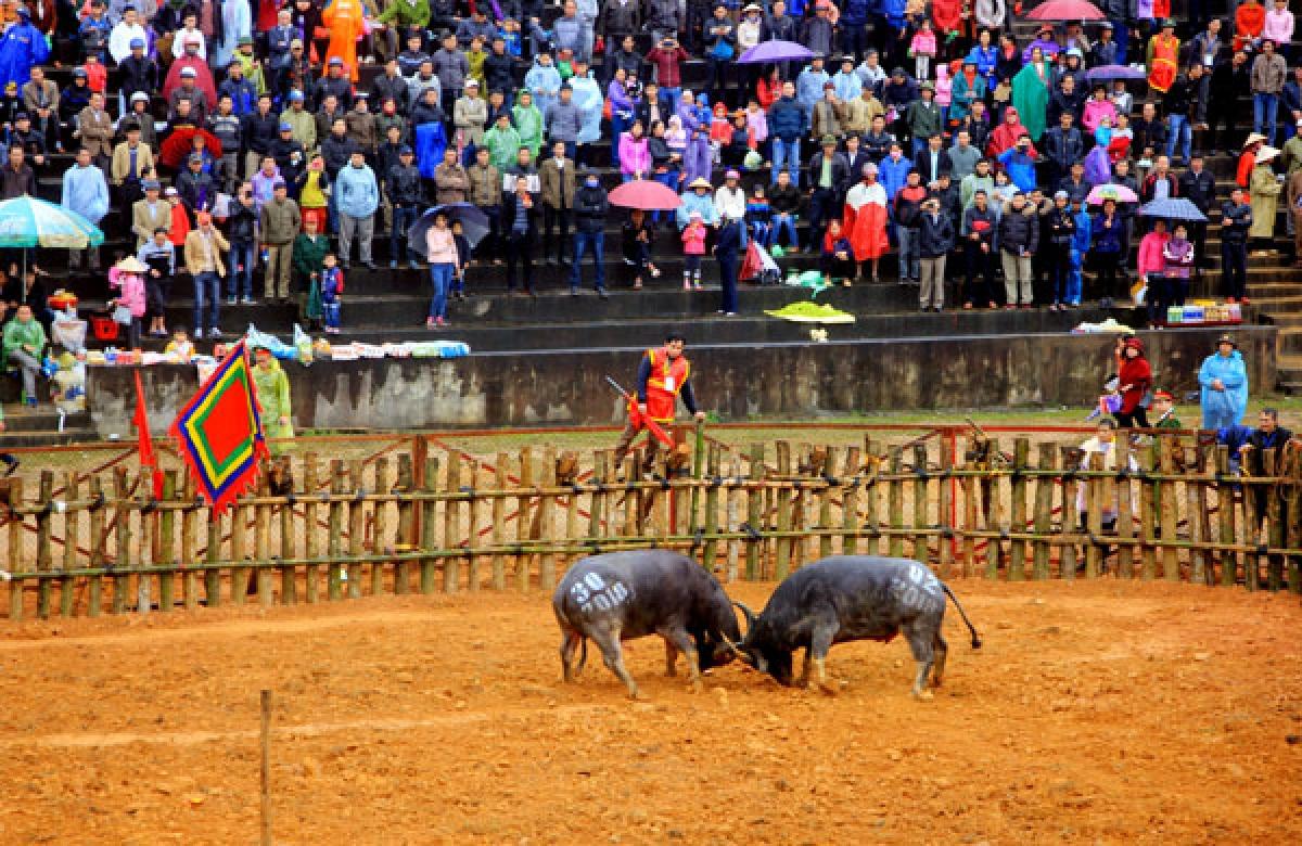 Lễ hội Chọi trâu.