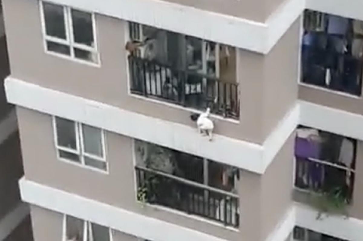 Bé gái 3 tuổibò từ trong nhà, trèo ra lan can.