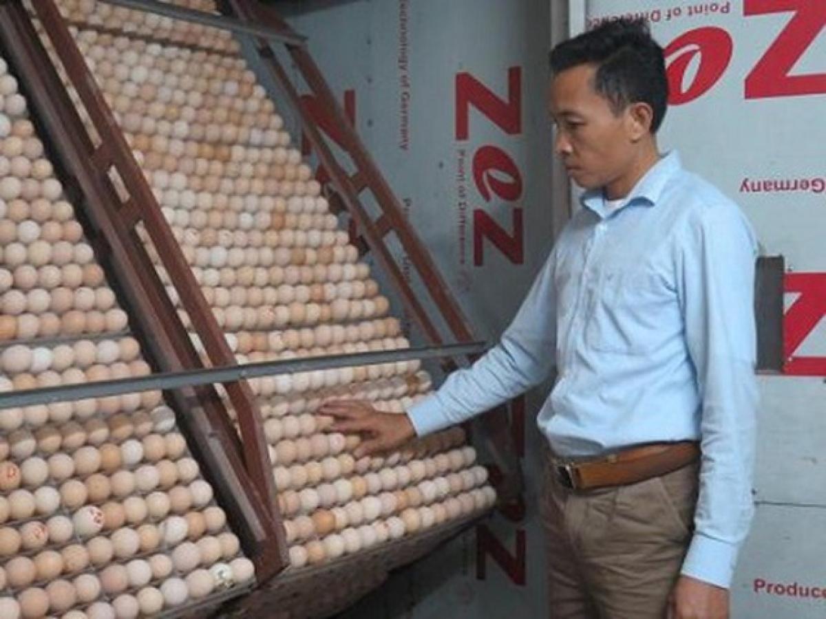 Lò ấp của anh Phạm Đình Dừ cứ 2 ngày ấp nở ra 1,5 vạn gà giống nhưng rất khó khăn khi đưa đi các tiểu khác tiêu thụ (ảnh: TTXVN)