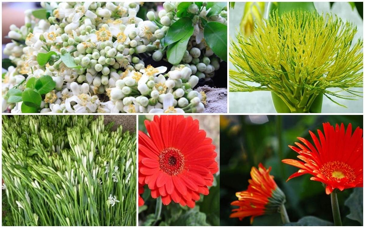 """Năm nay, các loại """"hoa quê"""" được nhiều người mua về lễ Rằm tháng Giêng."""