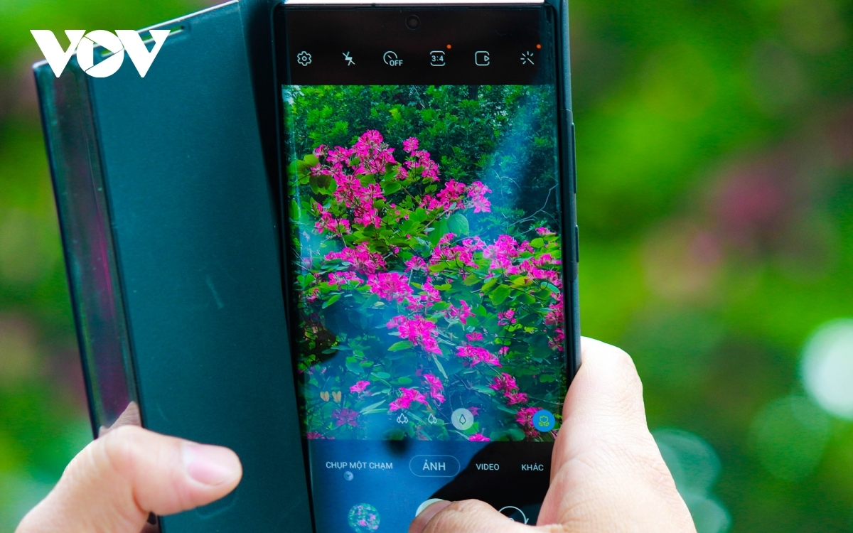 Many young people snap photographs of the bright flowers in order to keep memories of the spring blossoms.