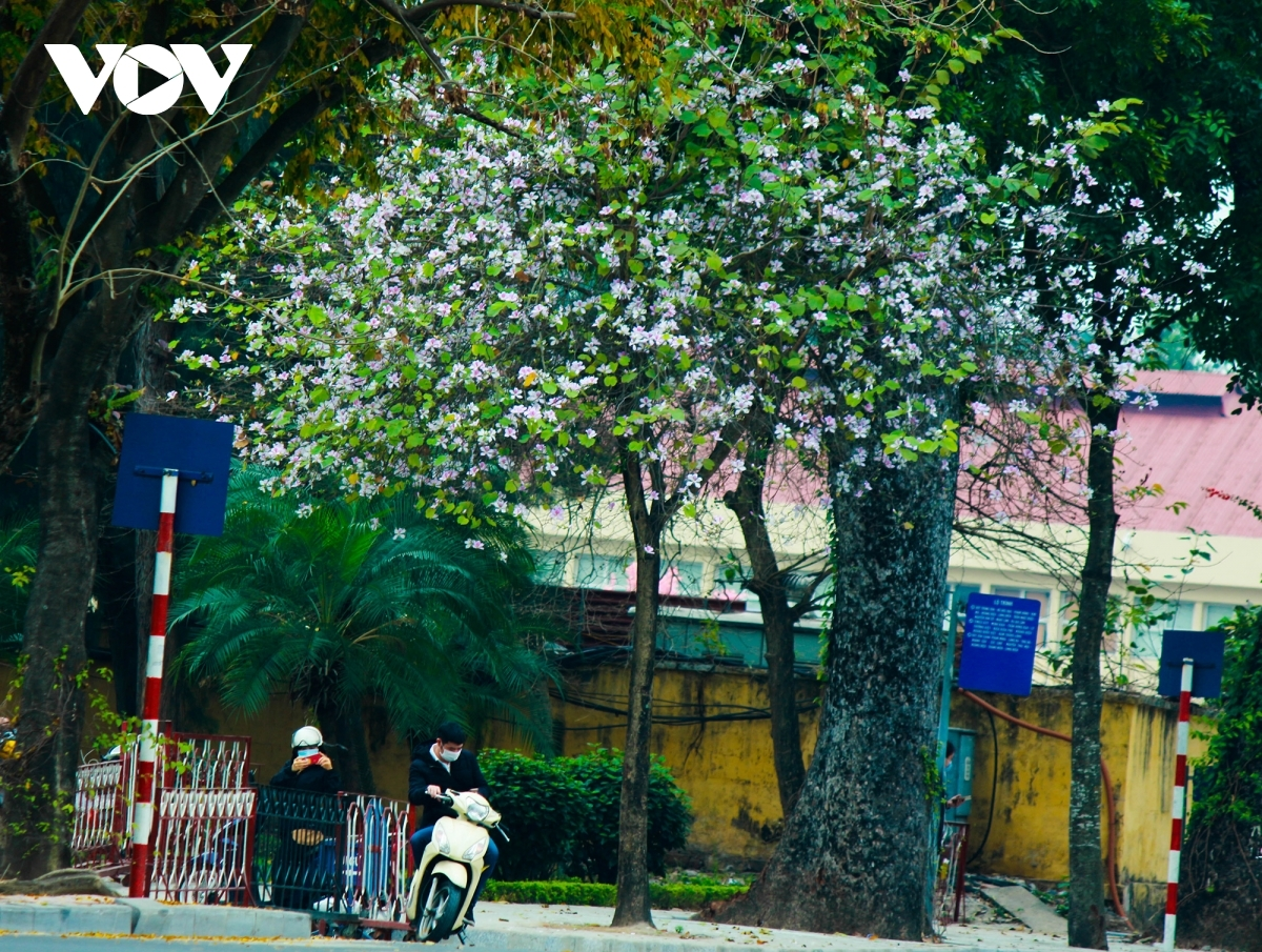 Their beauty and fragrance provides both locals and tourists with an unforgettable memory.