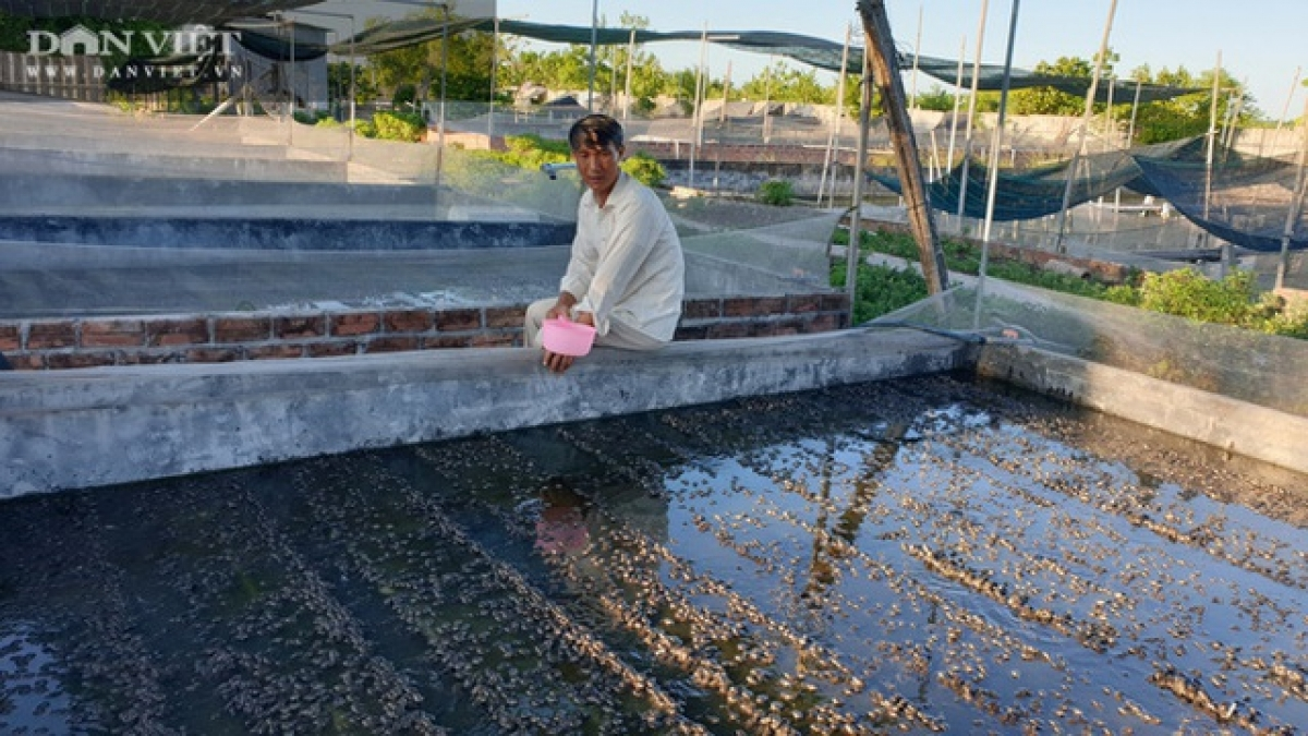 Nhiều năm qua, cơ sở sản xuất ếch và ba ba giống của ông Tài trở thành địa chỉ uy tín, chuyên cung cấp con giống chất lượng cho các hộ nuôi ếch trong và ngoài tỉnh.