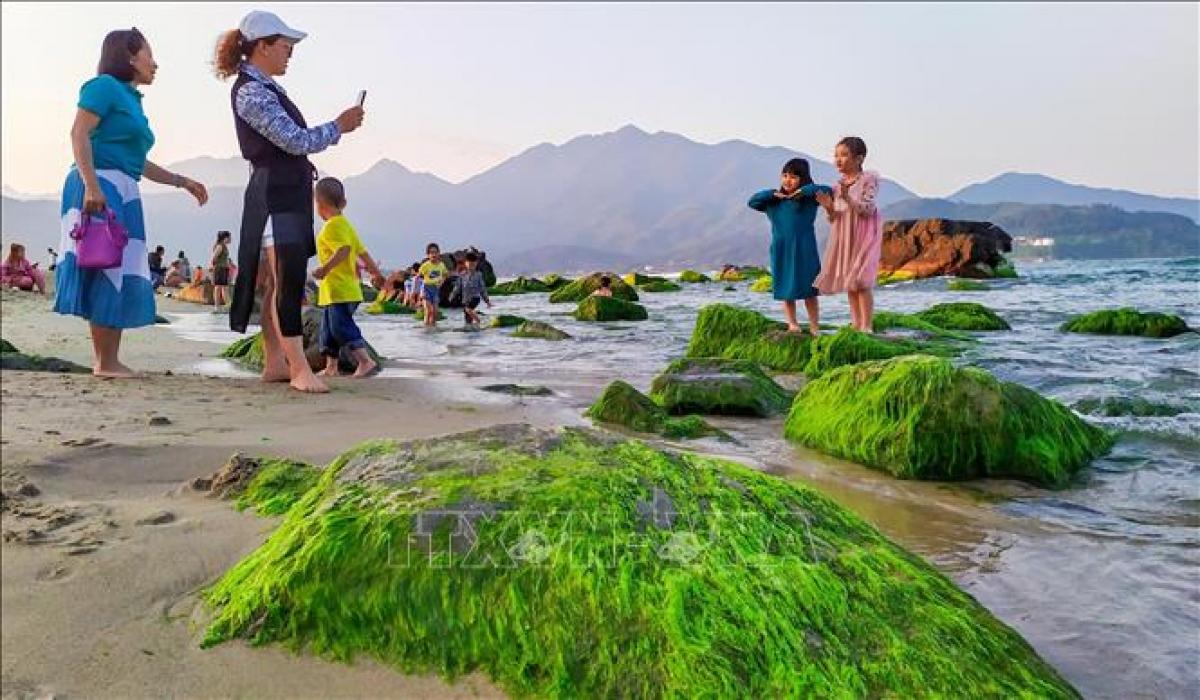 Người dân, du khách thích thú vui chơi chụp ảnh tại bãi rêu khi thủy triều rút.
