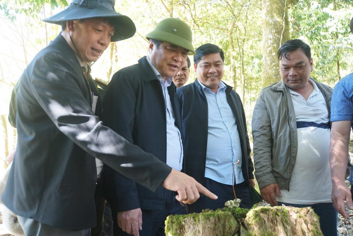 Bí thư Tỉnh ủy Quảng Nam khảo sát vùng cây dược liệu và sâm Ngọc Linh tại xã Trà Linh, huyện Nam Trà My.