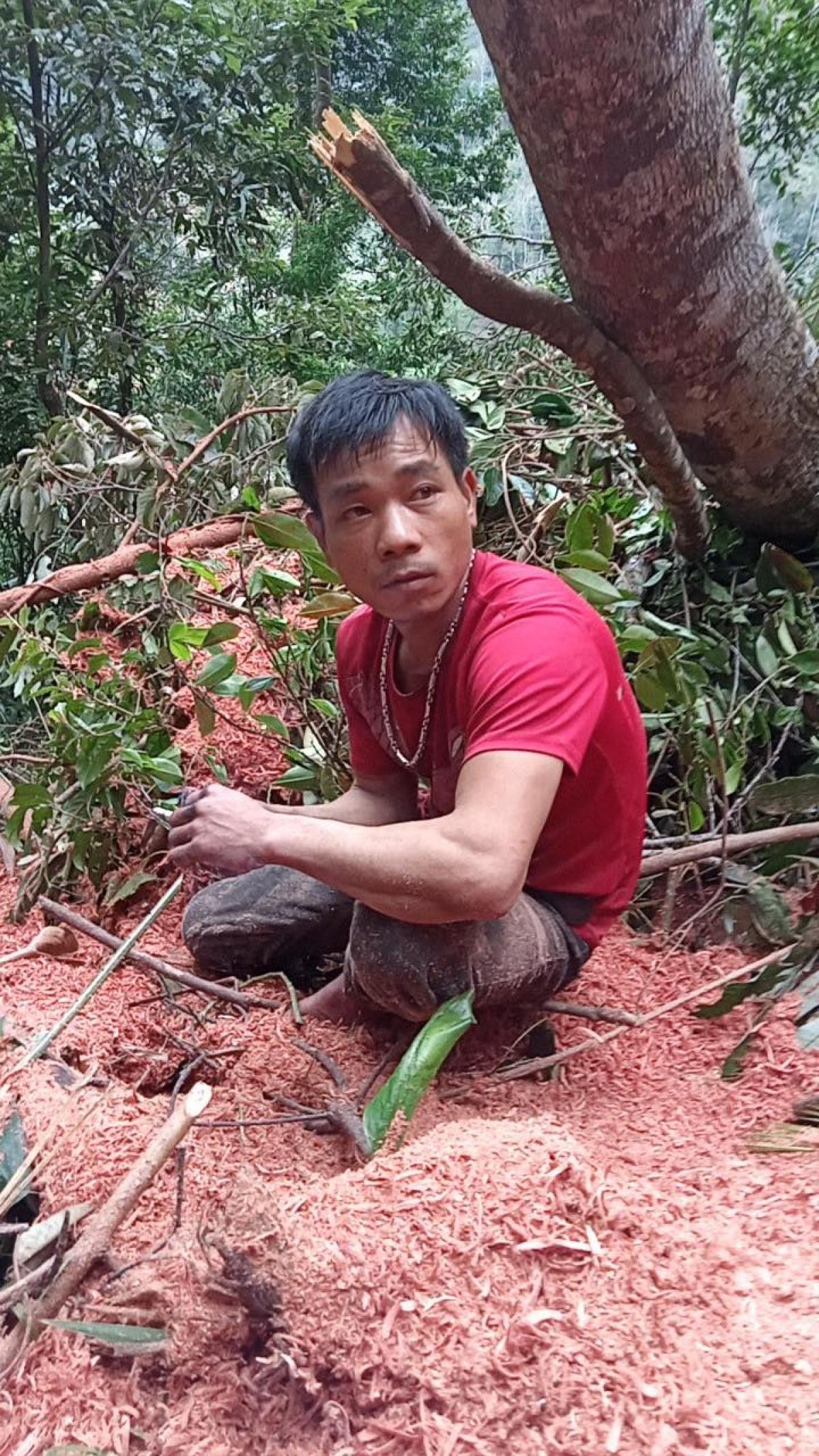 Một trong hai đối tượng đang đốn hạ cây rừng tại tiểu khu 670, 767 bị bắt quả tang đang đốn hạ cây rừng.