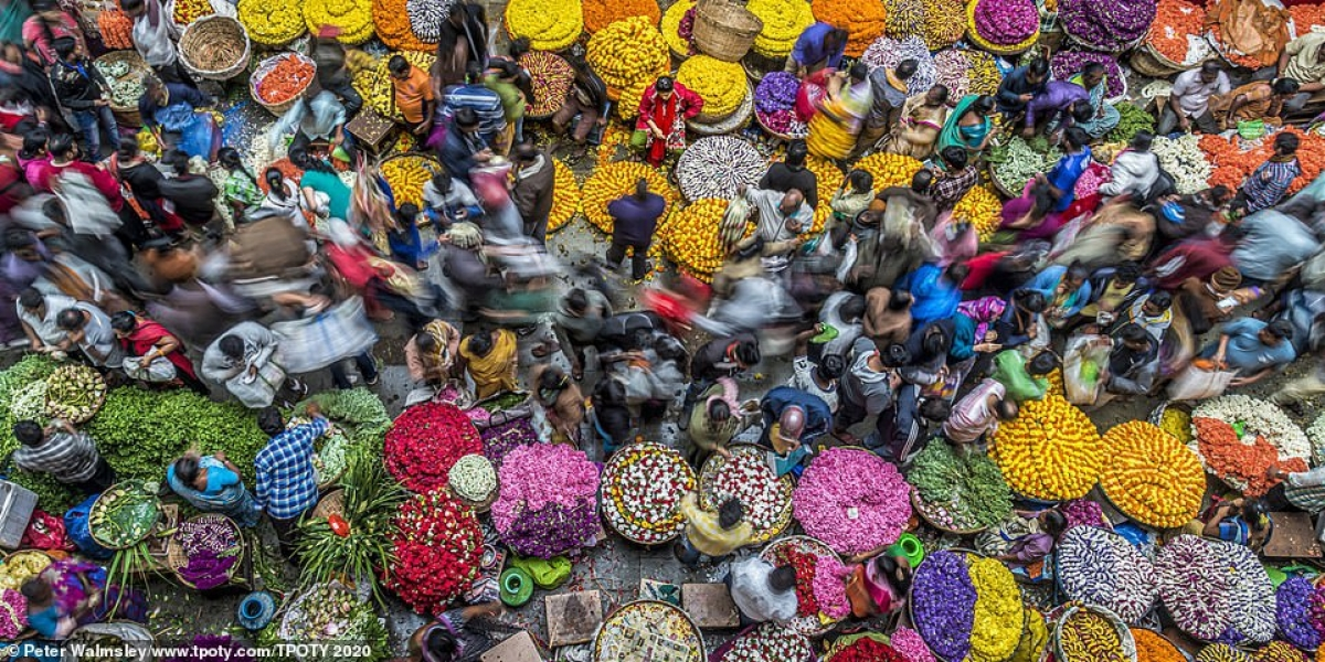 """A photo shot in Bengaluru, India, by British photographer Peter Walmsley comes first in the """"One shot - Colours of life"""" single image category."""