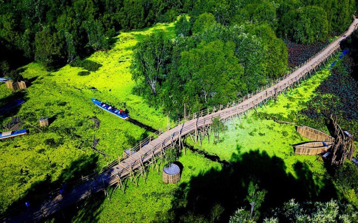 The longest record bamboo bridge in Vietnam at Tra Su Melaleuca forest.