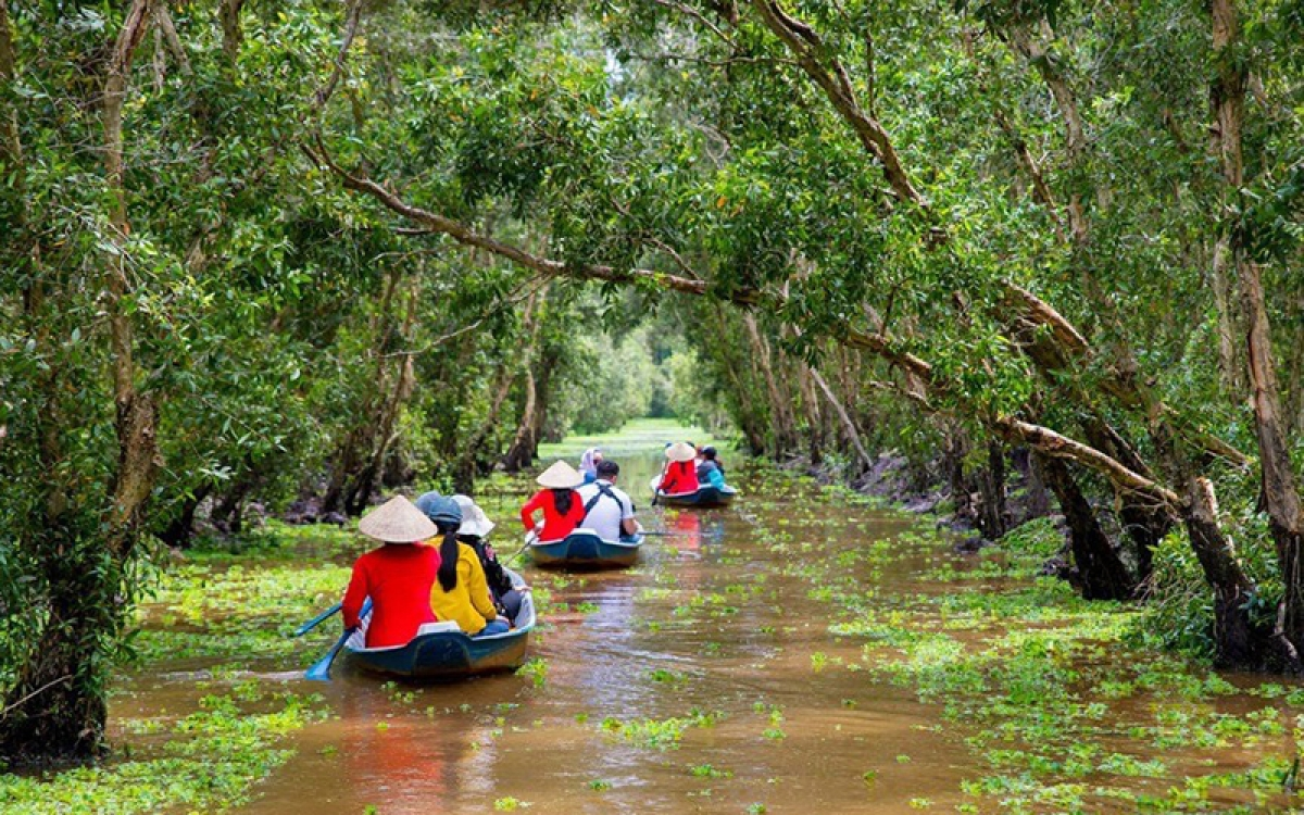 Many tourists choose to swim, canoe, explore the green Melaleuca forest.