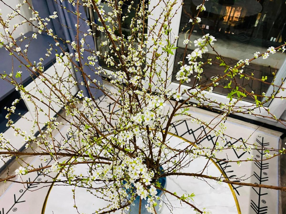 Mỗi bông hoa tuy rất nhỏ nhưng vì một cành tuyết mai có nhiều hoa nên tạo ra một tổng thể rất thu hút. (Ảnh: KT)