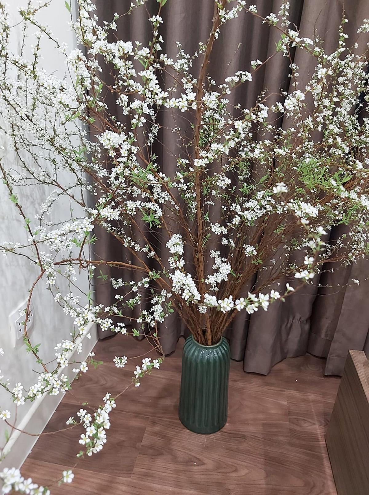 Mỗi cành tuyết mai có chiều dài khoảng 1 - 1,5m và trên thân có rất nhiều hoa và lộc. (Ảnh: KT)