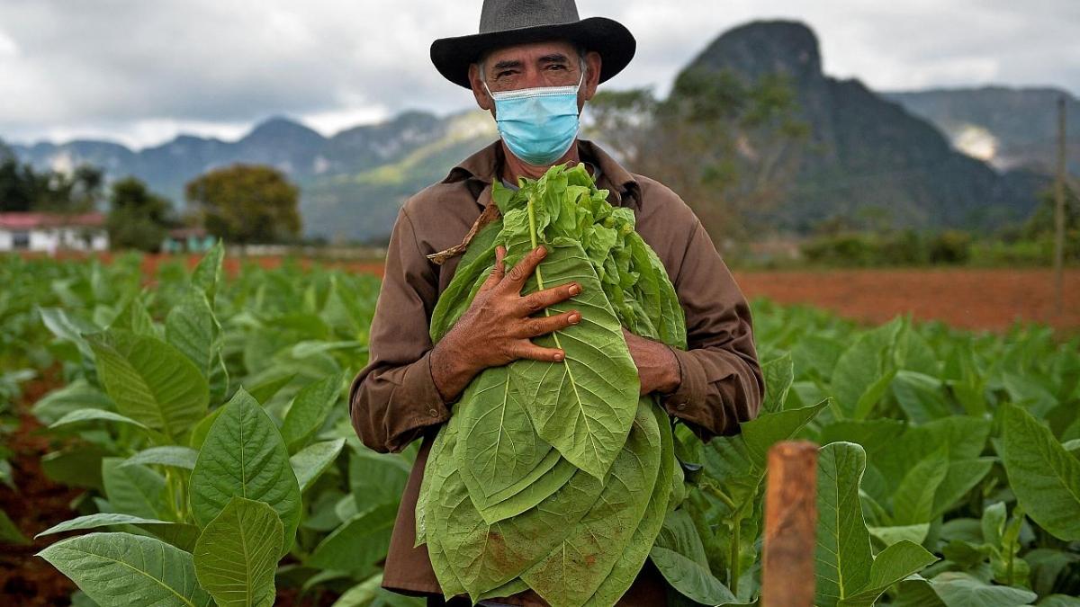Những nhà hàng và khu vườn của Eduardo Hernandez không còn khách du lịch do đại dịch Covid-19. Nguồn: AFP
