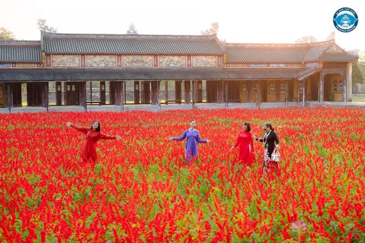 Tử Cấm Thành (TP. Huế) hiện đang tràn ngập trong sắc hoa xác pháo đỏ. Không gian cổ kính và vườn hoa rực rỡ tạo nên khung cảnh tuyệt đẹp để du khách ghi lại những bức hình ấn tượng.