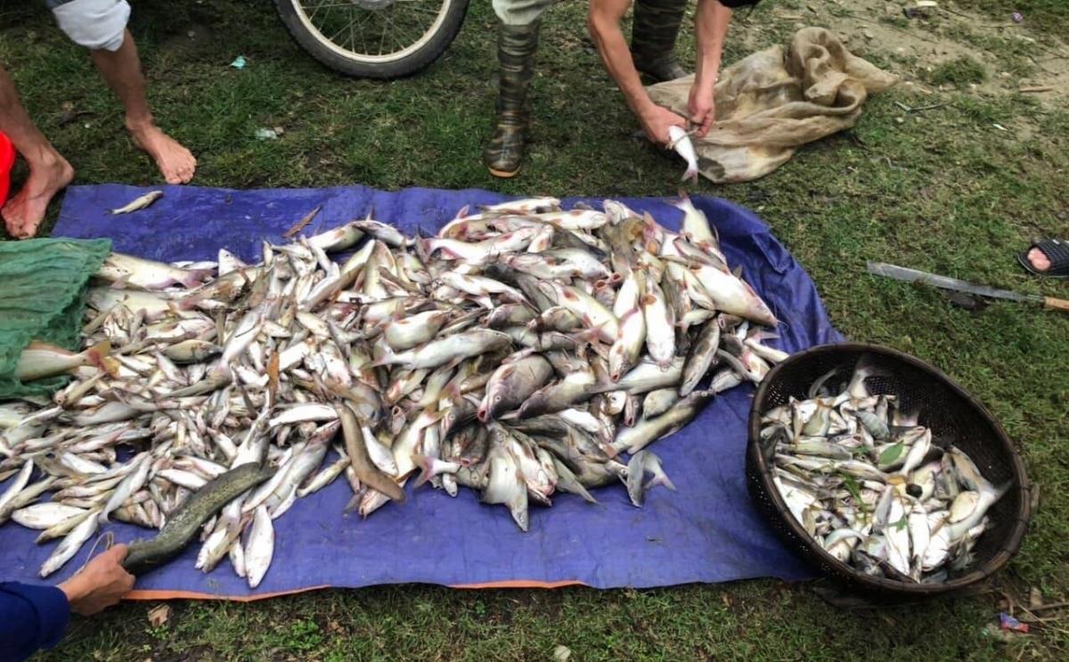 Cá chết bất thường trên sông Mã.