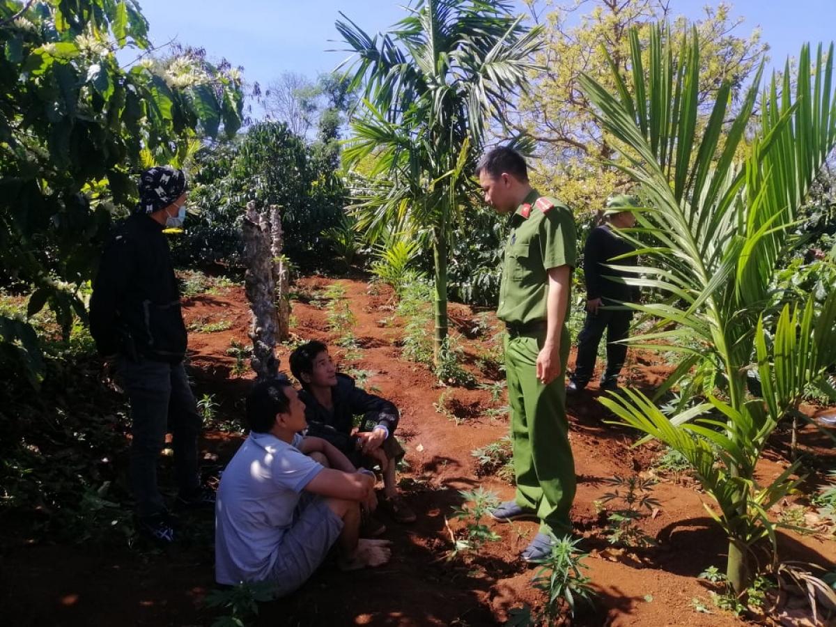 Tài và Quỳnh (hai người ngồi) bị xử lý về hành vi trồng cần sa trái phép.