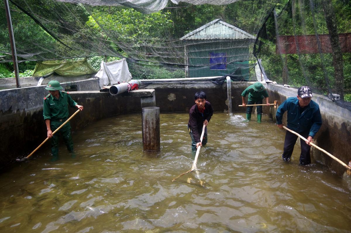 Người dân các xã biên giới Phong Thổ tham gia mô hình nuôi cá nước lạnh do Bộ Chỉ huy Biên phòng Lai Châu làm chủ...