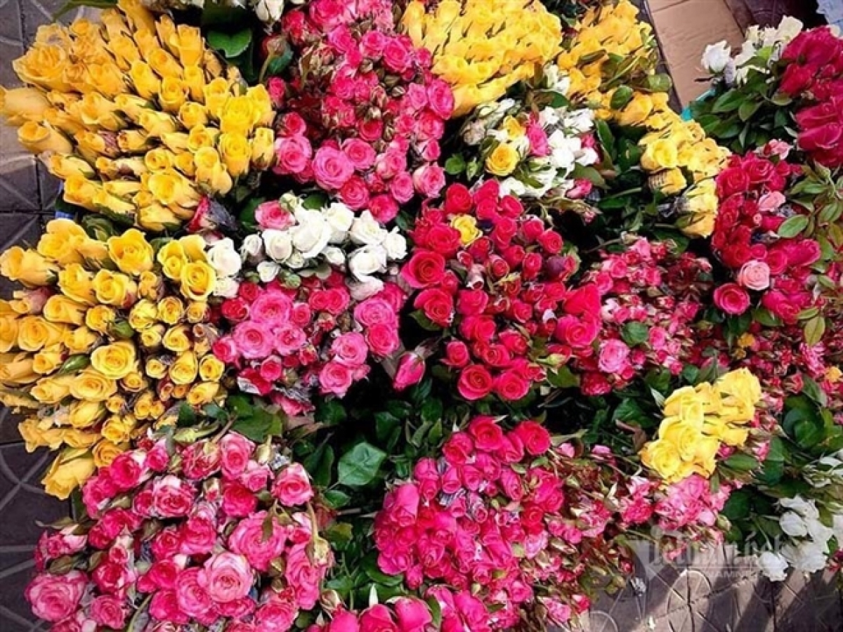 In Hanoi, the price of roses has witnessed a six-fold increase compared to normal days. For example, roses with short branches costs VND120,000 per bundle of 50 flowers, while roses featuring long stem sold at between VND200,000 and VND250,000 for each bunch of 50 flowers