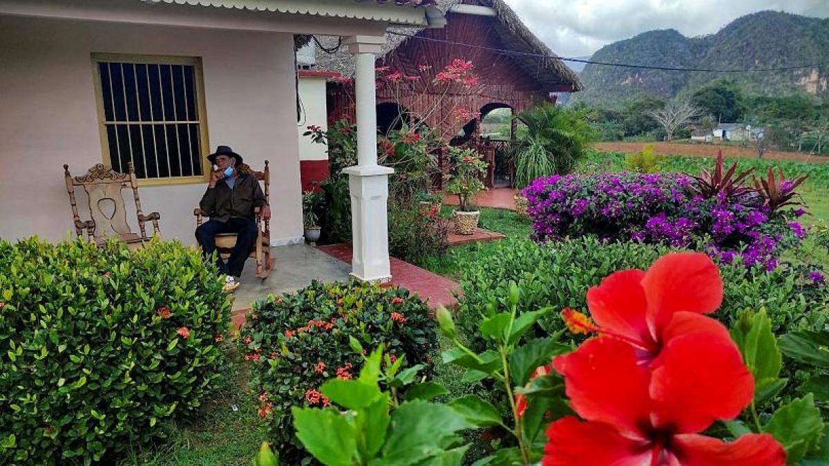 Eduardo Hernandez vẫn duy trì cuộc sống nhờ nghề trồng cây thuốc lá. Nguồn: AFP
