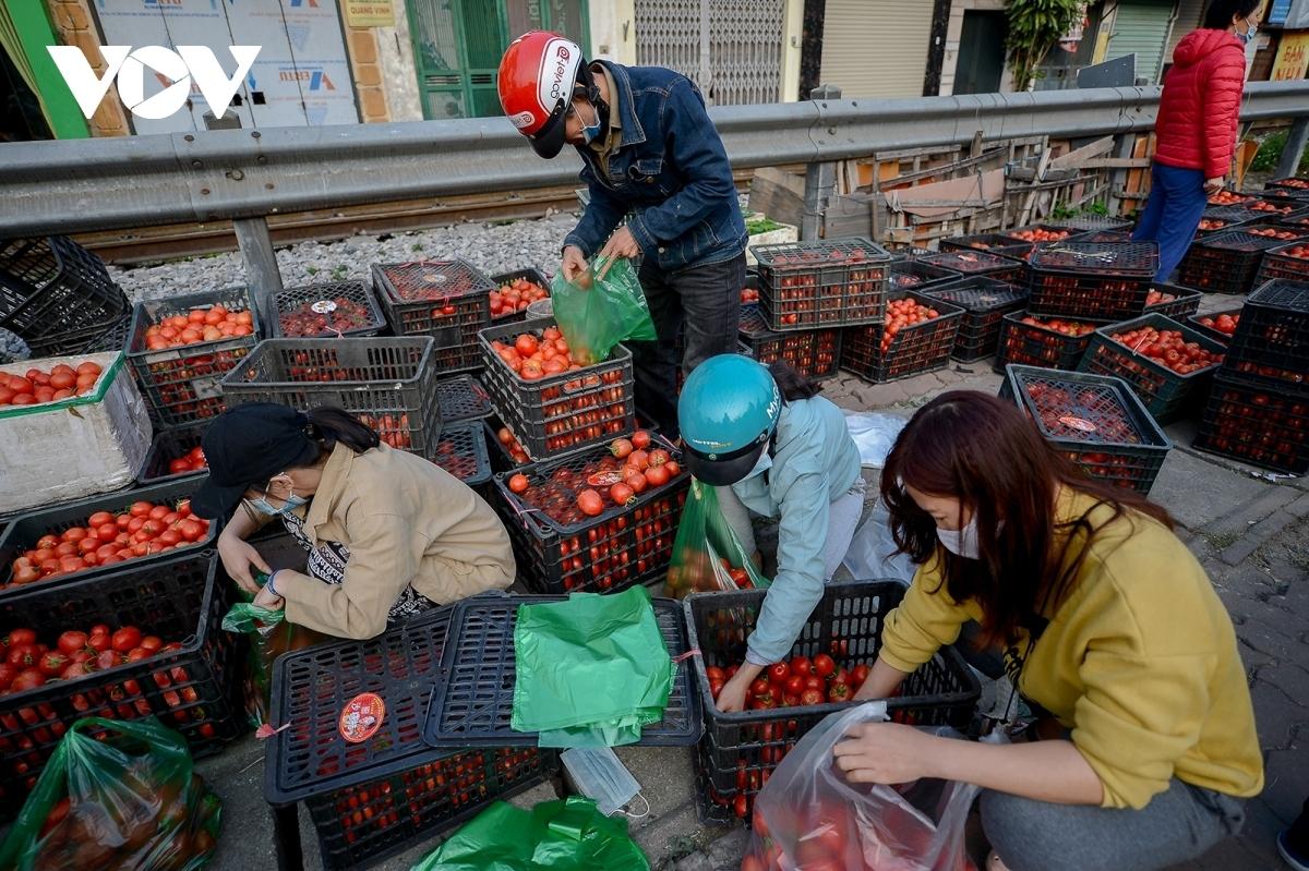 """Người dân """"giải cứu"""" cà chua trong đợt dịch vừa qua."""
