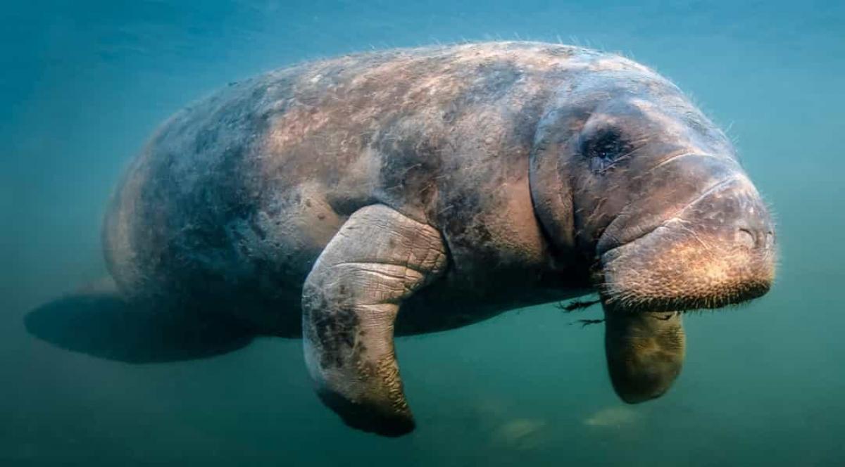 Những sự thật bất ngờ và đáng yêu về các loài động vật 0014