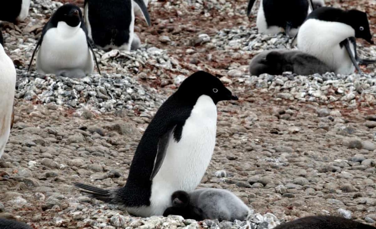 Những sự thật bất ngờ và đáng yêu về các loài động vật 007