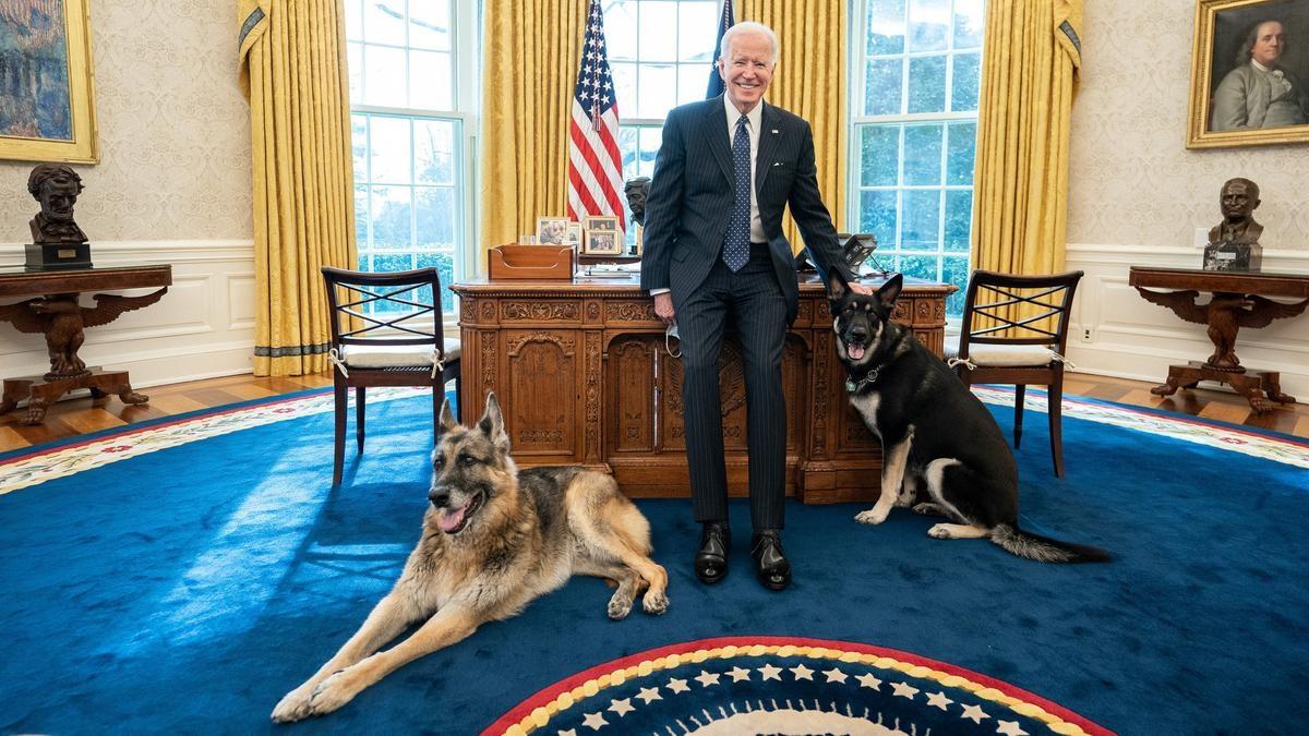 Vì cắn người, hai chú chó của Tổng thống Biden là Major và Champ, đã bị gửi về quê nhà ở Deleware sau thời gian ngắn chuyển vào Nhà Trắng. Ảnh: Reuters