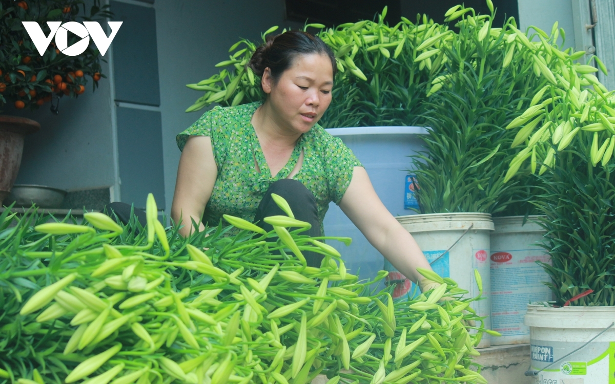 Oanh, who runs a business in Tay Tuu flower village, says the prices of the flowers seem to be stable following the novel coronavirus (COVID-19) pandemic, thereby making sellers more happy due to the increase in purchases.