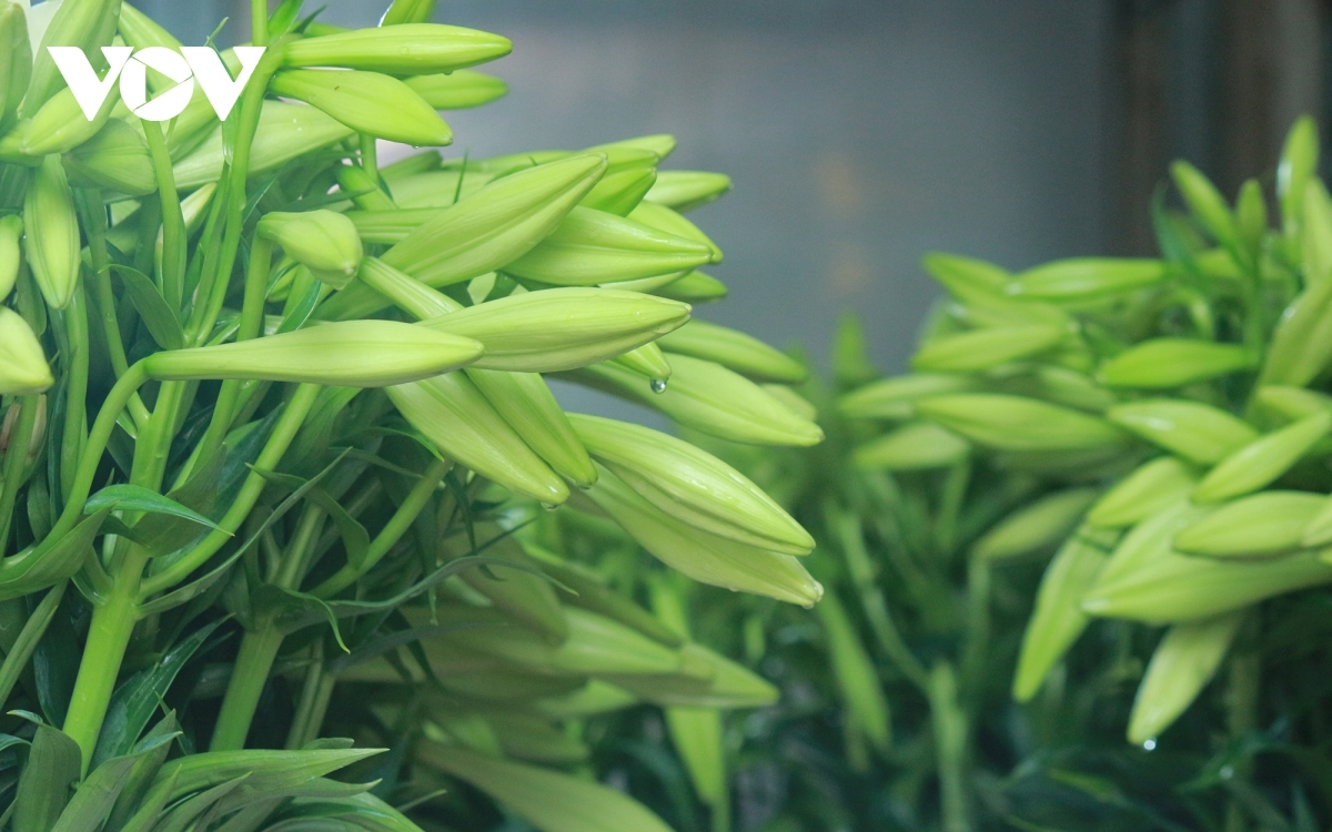 Lilies tend to be harvested at the end of April, with a new crop beginning from July.