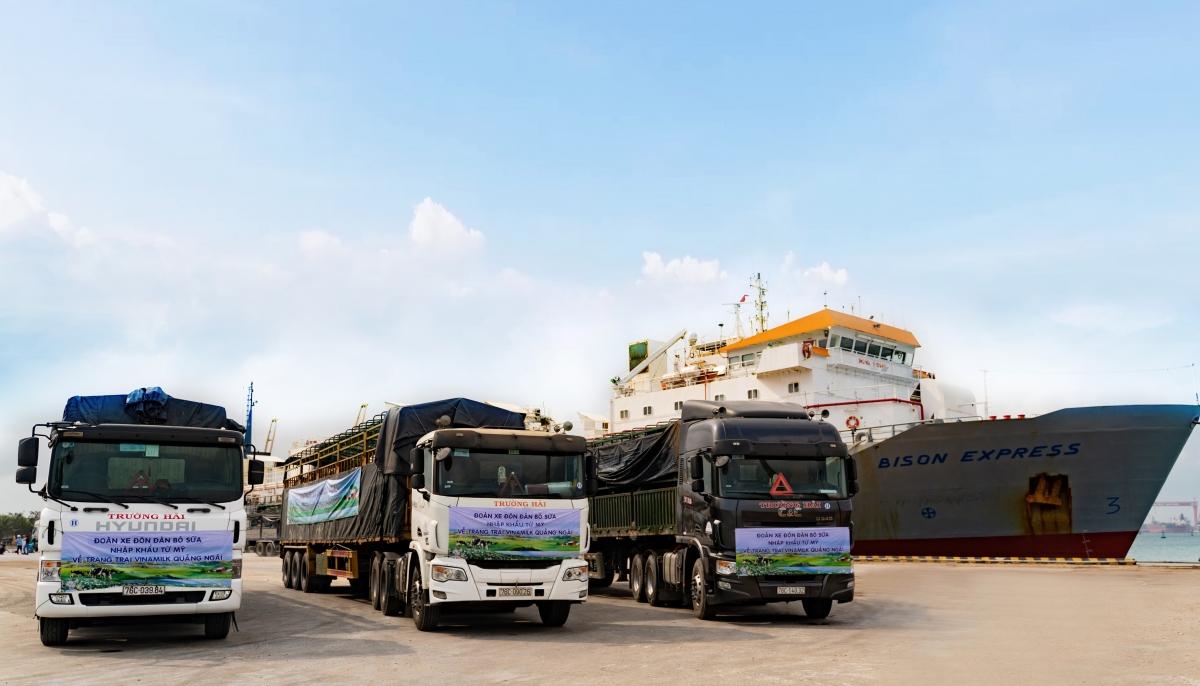 Đoàn xe hơn 80 chiếc tập kết tại cảng Dung Quất, sẵn sàng để đưa hơn 2.100 bò sữa nhập khẩu từ Mỹ về trang trại mới của Vinamilk tại Quảng Ngãi.