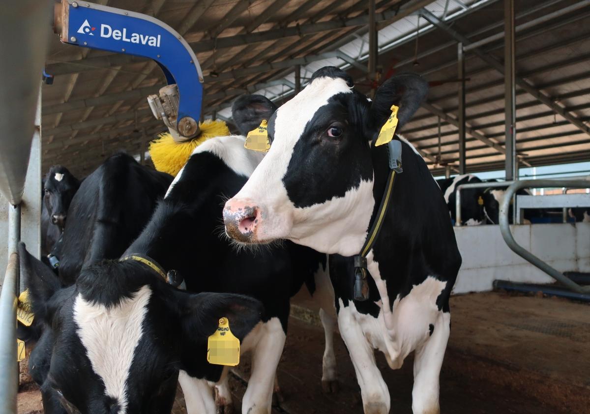 Khu vực chuồng trại có hệ thống làm mát tự động và chổi massage tự động giúp bò dễ chịu, không bị căng thẳng và hồi phục nhanh sau một hành trình dài.