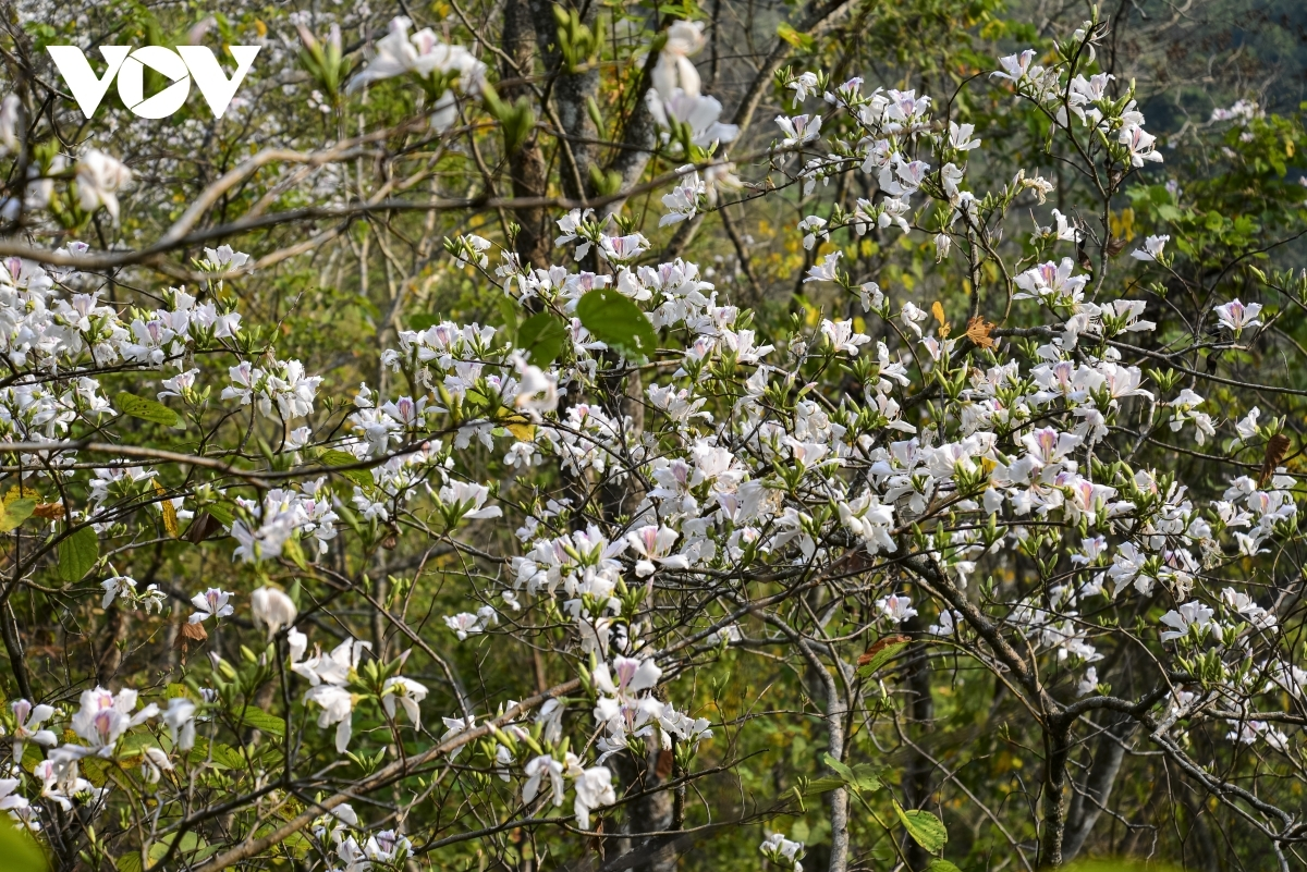The blossoming of the flowers signals that spring is now in full swing.