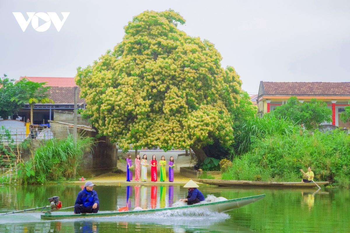 When in full bloom, the sight of Hoa Bun creates a romantic scene in rural areas.