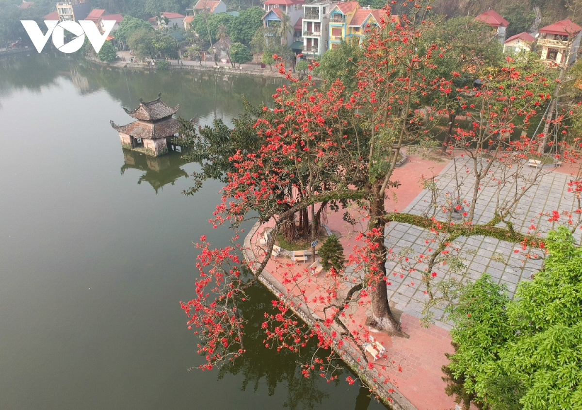 An old tree in Thay Pagoda in Quoc Oai district on the outskirts of Hanoi is notable for its ancient beauty.
