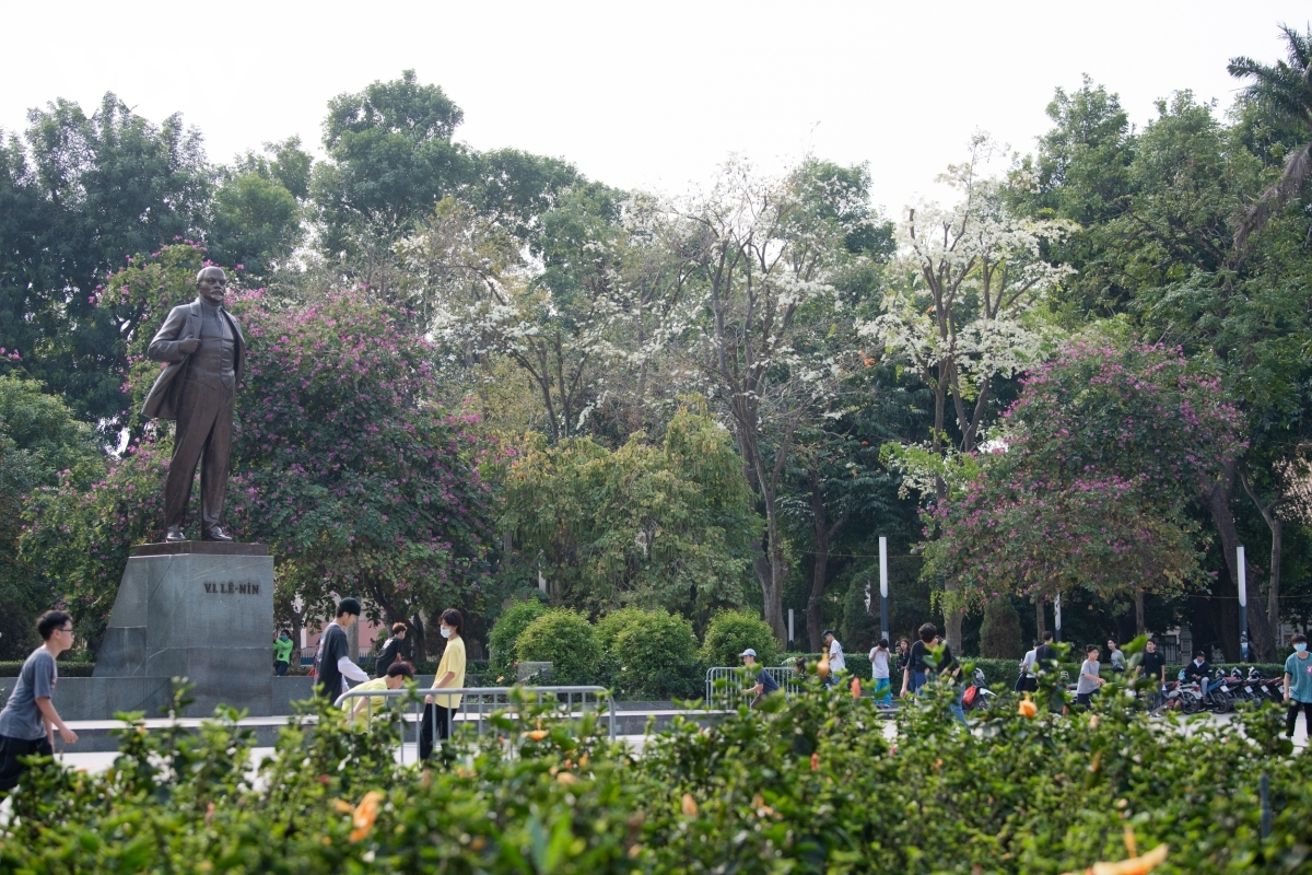 A corner filled with Hoa Sua in full bloom can be seen at Lenin park.