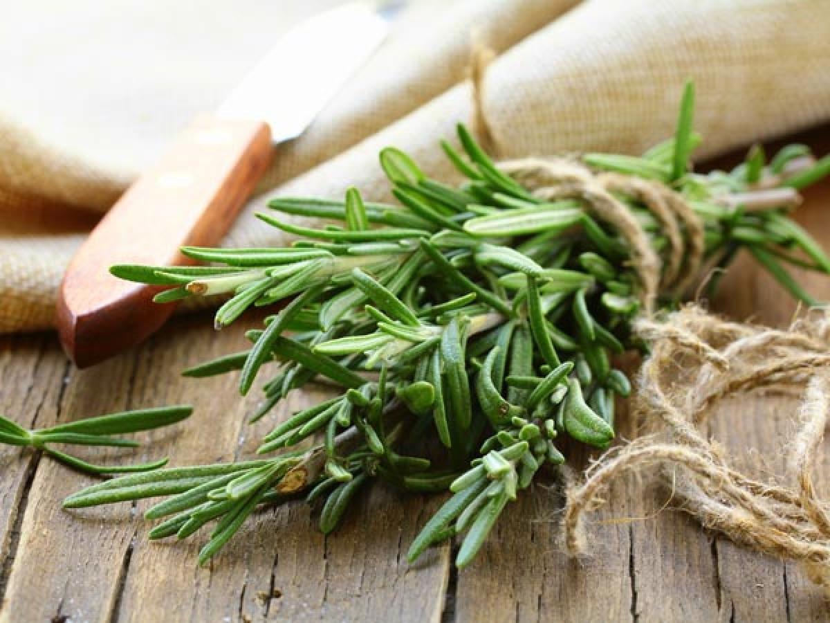 Cỏ xạ hương: Cỏ xạ hương là một loại thảo dược thơm rất hiệu quả trong việc cải thiện mùi cơ thể. Bạn có thể dễ dàng sử dụng cỏ xạ hương như một gia vị trong bữa ăn hàng ngày.