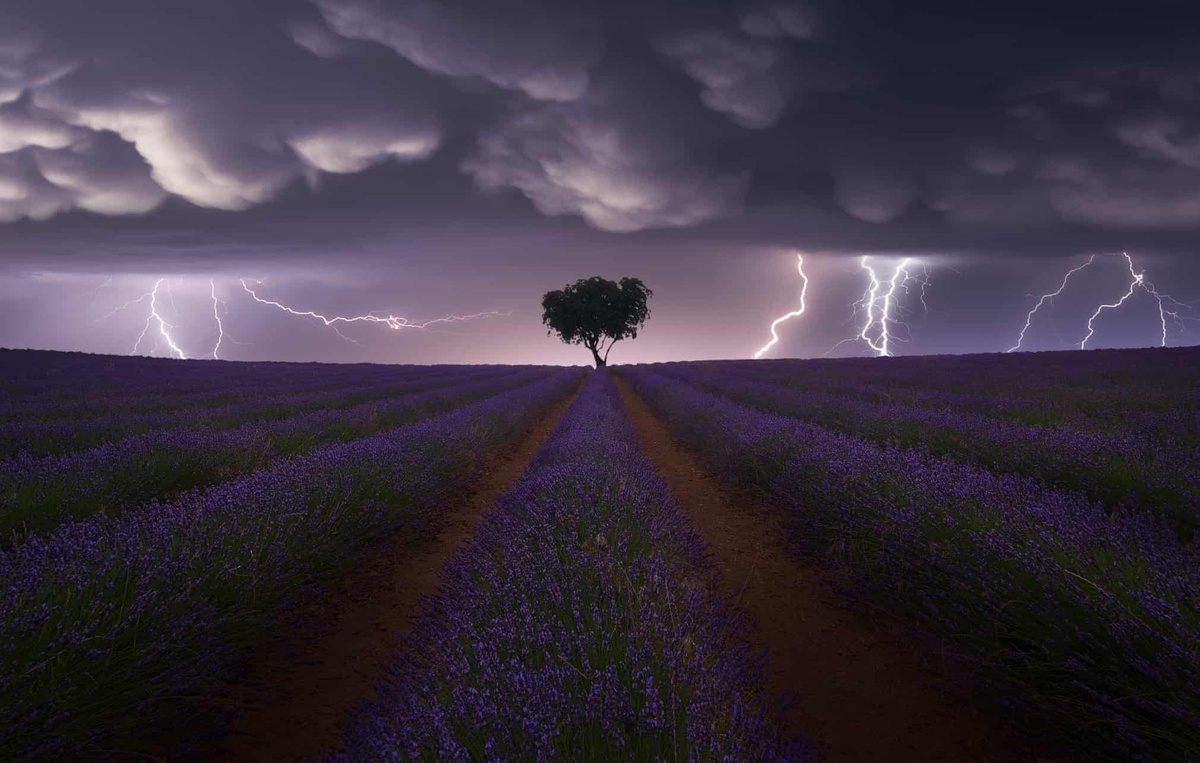 "The winner of the landscape category goes to a photo titled ""Electric Storm on Lavender"" by Juan Lopez Ruiz. It captures the moment lightning strikes a flowering field of lavender in Guadalajara, Spain, with a solitary tree at the centre set against the sky at dusk."