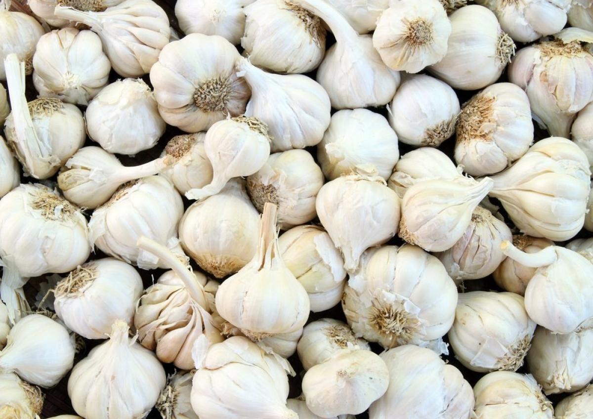 Tỏi: Có thể bạn ngại ăn tỏi do mùi vị nồng khó ngửi của chúng, nhưng tỏi thực chất lại rất có lợi cho tim mạch của bạn. Nghiên cứu cho thấy nước ép tỏi có thể giúp ngăn tắc động mạch bằng cách giảm huyết áp và giảm mức cholesterol - các yếu tố có thể gây bệnh tim mạch./.