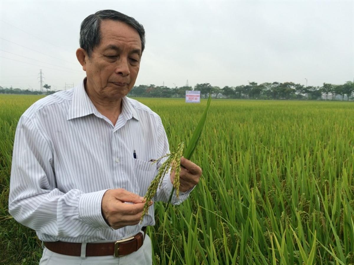 GS.TS, Viện sĩ Trần Đình Long kiểm tra khu vực khảo nghiệm sản xuất lúa HDT10 tại xã Liên Hà. Ảnh: Báo Nông nghiệp