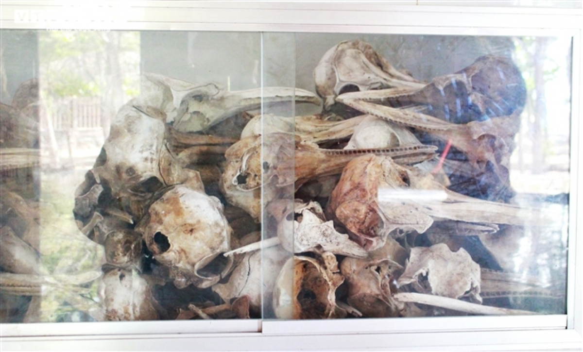 The intact skeletons of whales that have been dead for a long time can be found in the ash house.