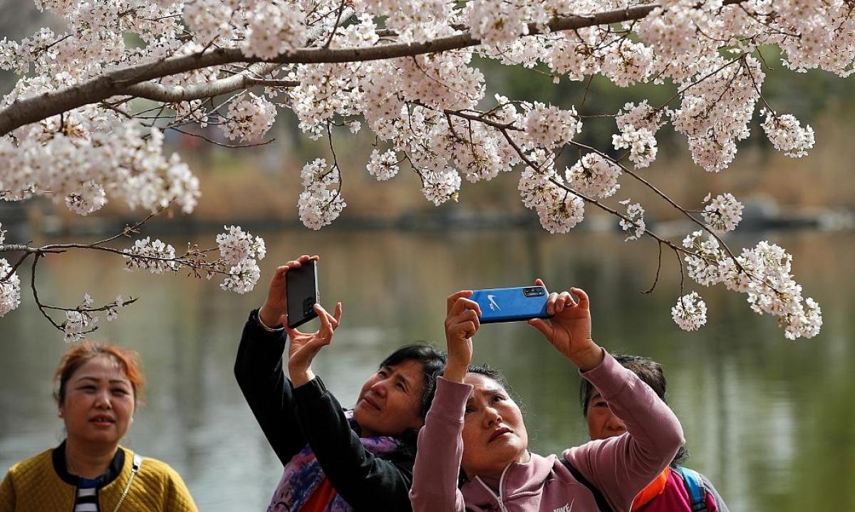 Tại công viên Ngọc Uyên Đàm (Bắc Kinh, Trung Quốc), người dân thích thú chụp ảnh hoa anh đào nở rục rỡ. Nguồn: AP