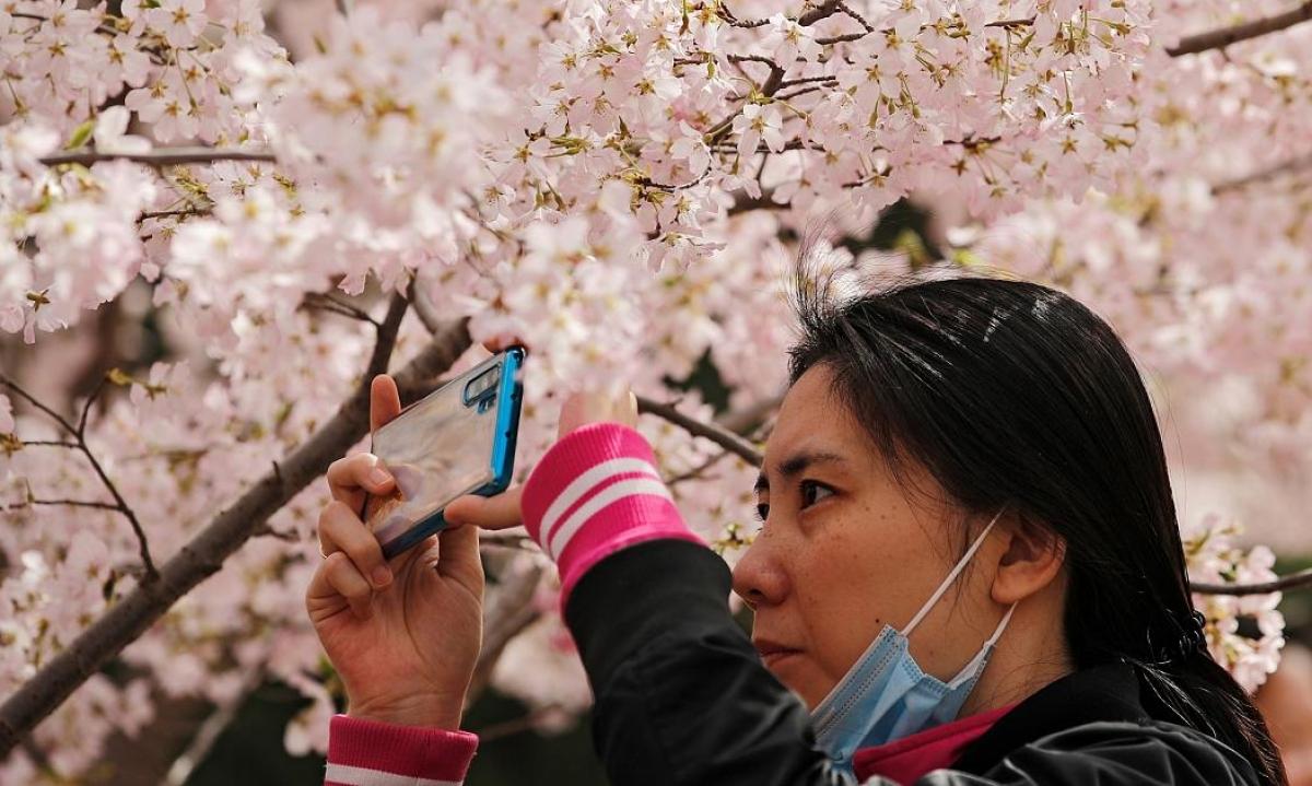 Không ai muốn bỏ lỡ cơ hội lưu lại những hình ảnh đẹp nhất với hoa anh đào.Nguồn: AP
