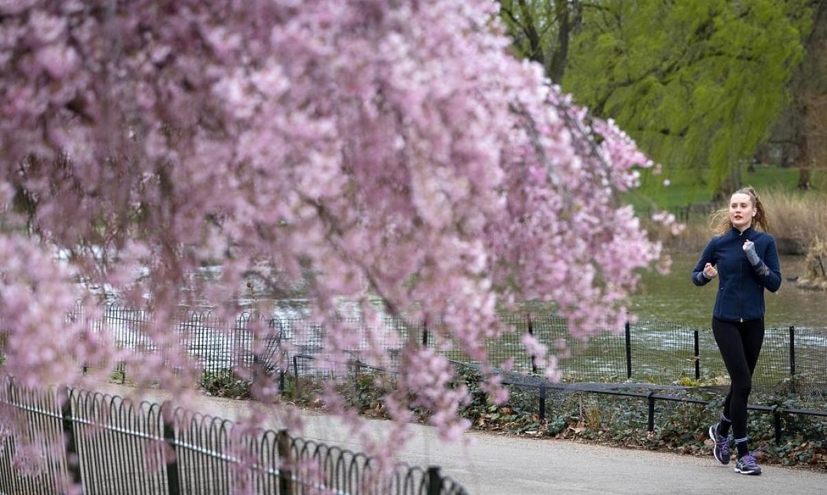 Một phụ nữ ngắm hoa trong lúc chạy bộ tại công viên St James Park, London, Vương quốc Anh./.