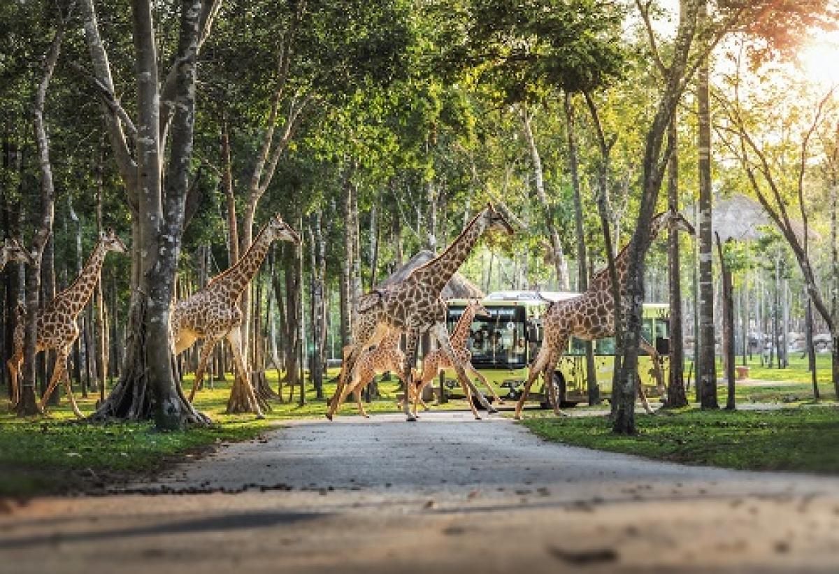 """Tọa lạc trên diện tích lên tới hơn 1.000 ha theo mô hình """"one stop destination"""" - một điểm đến mọi nhu cầu, Phú Quốc United Center xứng đáng là """"vũ trụ du lịch giải trí"""" với một loạt những nơi trải nghiệm quy mô khủng như: Công viên chủ đề lớn nhất Việt Nam VinWonders Phú Quốc, Công viên bảo tồn động vật bán hoang dã lớn nhất châu Á Vinpearl Safari,..."""