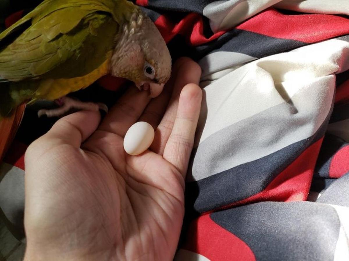 Trứng của tôi chứ?