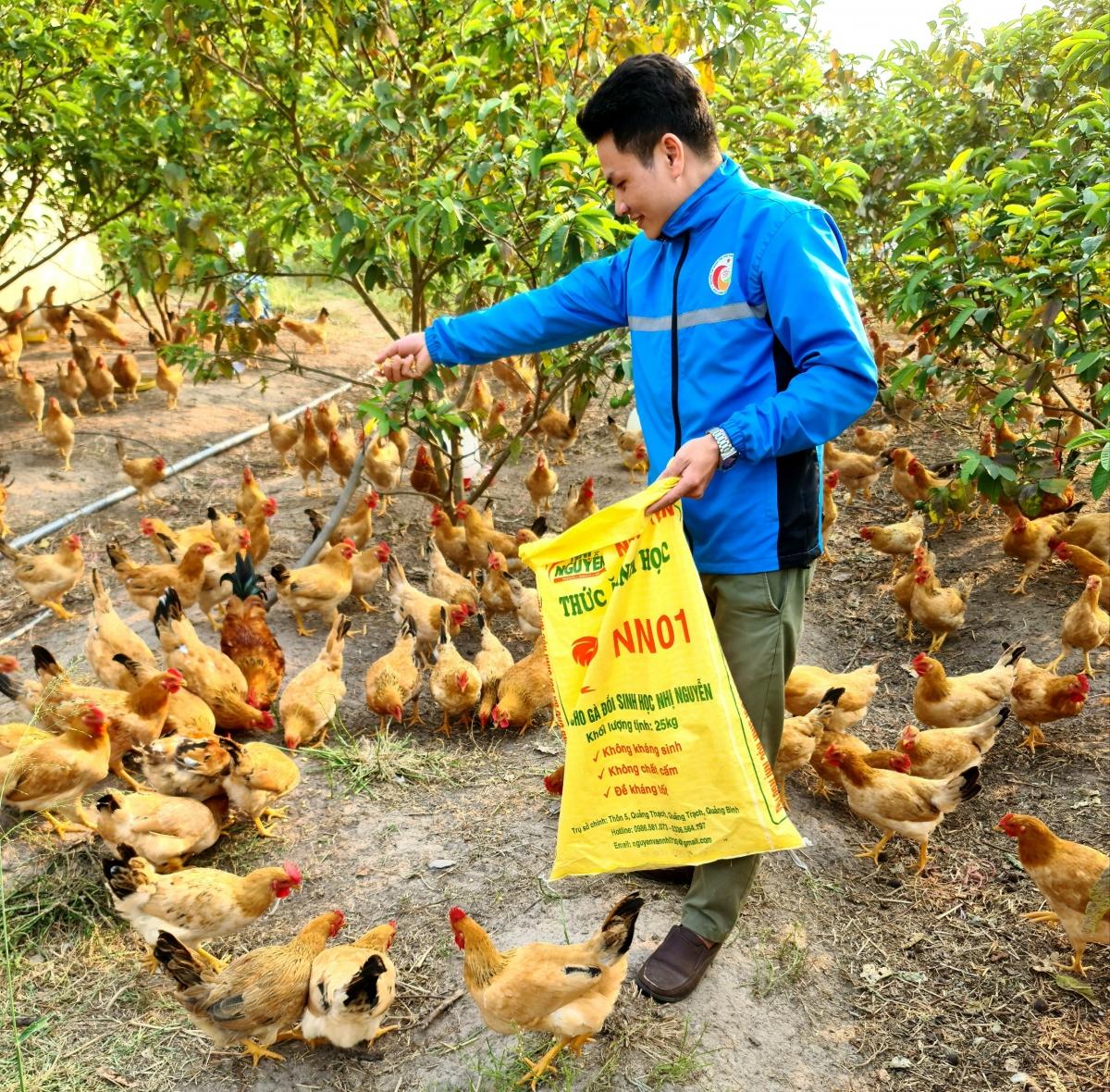 Công ty THHH Phát triển Nông nghiệp Nhị Nguyễn chuyên nuôi 2 giống gà hiếm trên thị trường: ri rừng và ri bản địa, có chất lượng thịt ngon. (Ảnh NVCC)