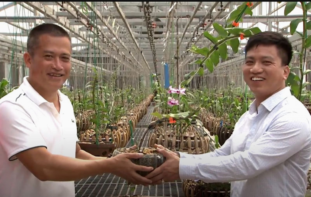 Cuộc trao đổi này khiến giới chơi cây cảnh ở TP Việt Trì xôn xao.