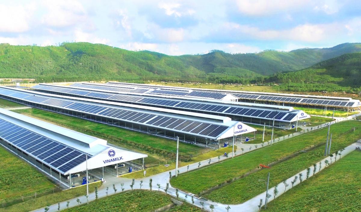 Năng lượng mặt trời đã được Vinamilk triển khai áp dụng trên tất cả trang trại cả nước, dự kiến hoàn thành vào cuối 2021