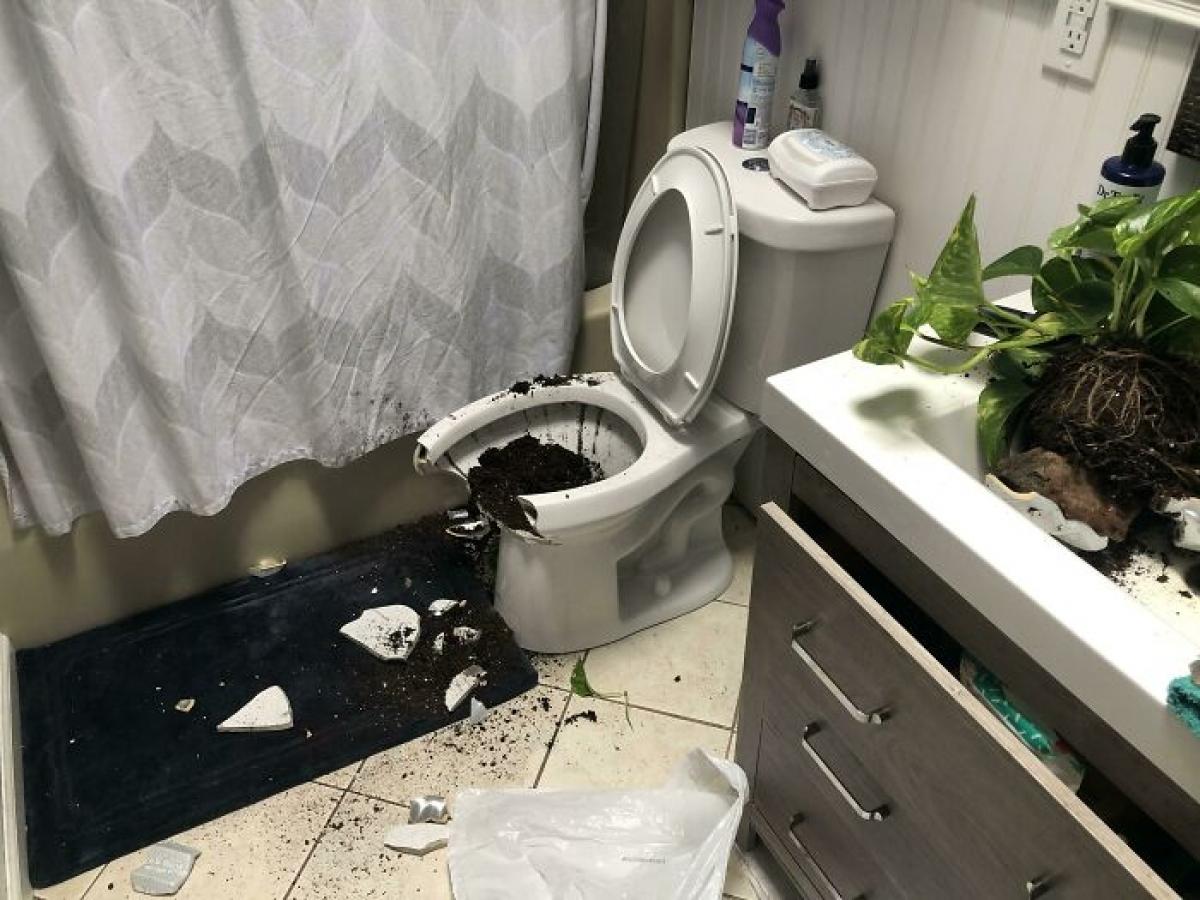 Hậu quả khi một cái cây rơi trúng bồn vệ sinh.